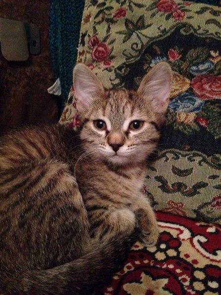 Помогите найти котёнка-девочку! 7 Марта отдали в