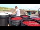 Комбайн для сбора ягод