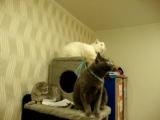 Синхронные коты- главный синхронизатор---МУХА
