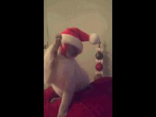 Кошак слушает Лепса