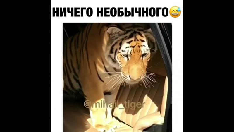 Когда везёшь кошку на дачу 😂 ptencoff by @mihail_tiger
