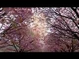 Андрей Мороз. КАЖДОМУ НУЖНА ЖЕНЩИНА..Авт.ролика Любовь Калинина