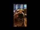 СоциумТВ - Очень злая собака