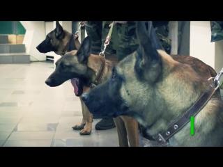 Бешеные псы- собаки-клоны будут служить в Якутии
