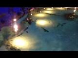 океанариум.  открытый аквариум с акулами