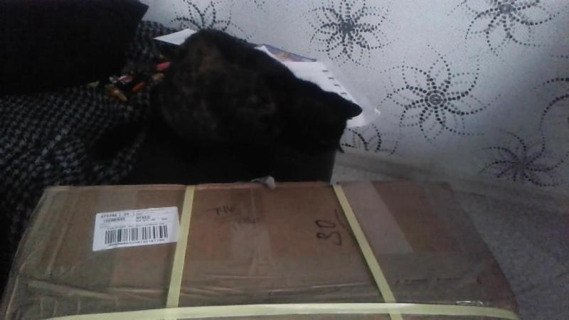 кіт любе посилку