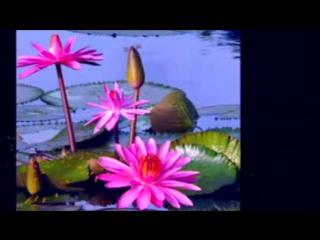 Невероятно красивая Мантра Любви и нежности, исполнения желаний. Творит чудеса!