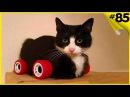 Топовая подборка с котами Коты под музыку Приколы с котами до слёз 2017