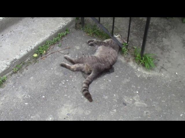 Живодёры в Сумах Убийство котов Сумы пр М Лушпы 7 05072017