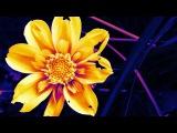 Shawn Lee's Ping Pong Orchestra feat Nino Mochella - Kiss The Sky