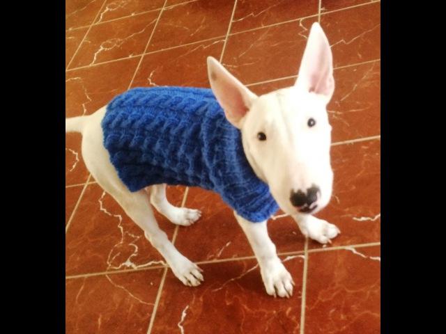 Pull pour chien à torsade tricot Jersey de perro dos agujas con trenzas