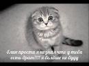 мемы про котов по ржатьворованные мультсериал первая серия