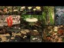 Яд Достижение эволюции Poison an Evolutionary Mystery 3 из 3 2015 03 Ядовитая война растений и животных
