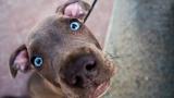 Интересные факты о собаках. Часть 1