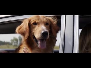 Собачья жизнь. Русский Трейлер (2017)