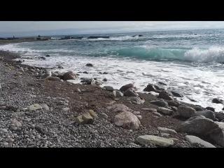 Огромные чайки на пляже Симеиза