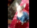 мой лысый кошка)