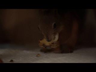 Орешек ест яблоко.