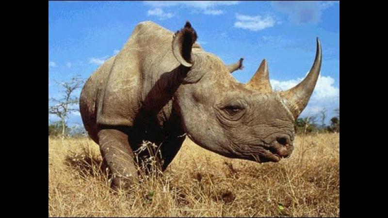 Дикие животные. Убийцы. Мир Африки. Документальный фильм Discovery. Серия 2. » Freewka.com - Смотреть онлайн в хорощем качестве