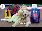 VLOG Выставка собак Арсания весна 2017 Алиса и золотистый ретривер собака голден Гр ...