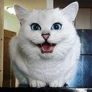 Этого котика зовут Коби, и его глаза красивее, чем 42% вселенной