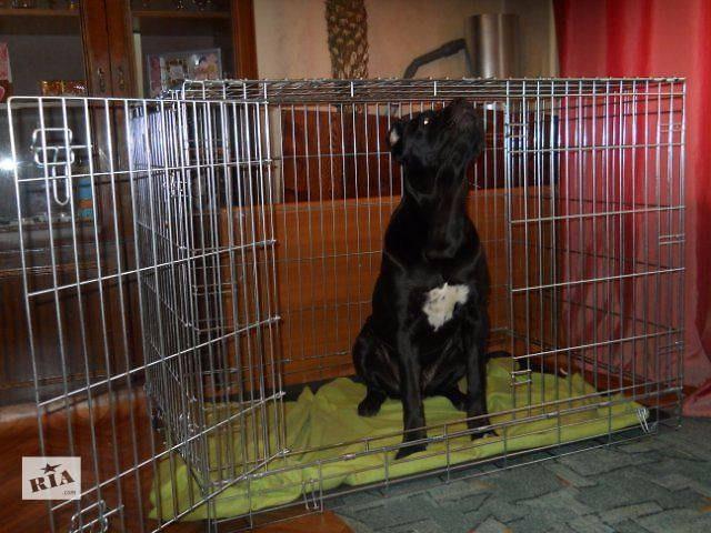 В Пено украли клетку для бешеных собак