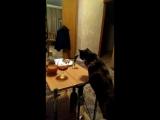 Кошка алкоголик - горе в семье...