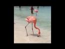 Розовый фламинго 😍🏖
