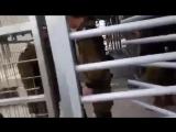 Israeli soldiers Kidnap kid again and again 以色列兵再次擄拐小孩