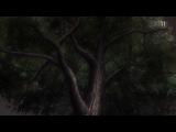 Мастер Муши ТВ-3 Mushishi Zoku Shou TV-3 10 из 10 (AniDub)
