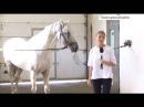 Алтайский конный завод один из лидеров России по разведению орловской породы лошадей