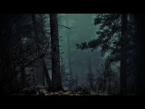 FOREST AT NIGHT - Crickets Owls Rain Wind in Trees - Relax Study Sleep De-Stress