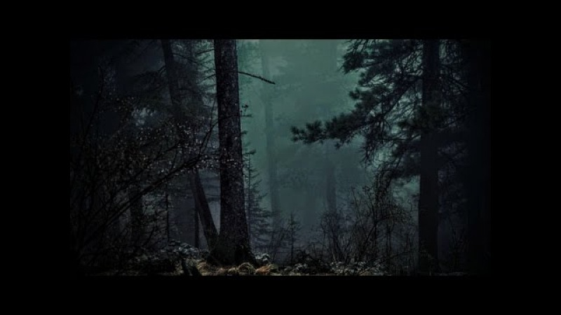 FOREST AT NIGHT - Crickets Owls Rain Wind in Trees - Relax Study Sleep De-Stress 🎧 100 RELAX