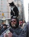 Думаю, этот мужчина обрел просветление и полностью отдал свой разум под контроль кота…