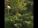 Прогулки по саду.4
