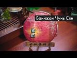Обзор Шу Пуэра Банчжан Чунь Сян, 2013 г., 357 гр