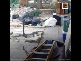 У этой собаки погиб хозяин, но ей повезло найти новый дом