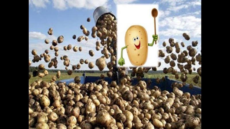 Як продати 1 картоплину за ціною 1 кілограма