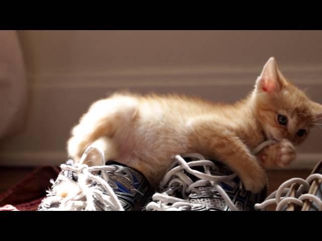 FRISKIES Дорогой котенок
