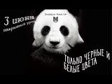 Черно-белый макияж: только черные и белые цвета. Видеоурок от Василия Скобелина