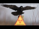Я ВАМ СПОЮ Олег Лавров, про Чернобыль 25 выпуск