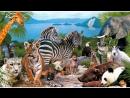 Фото - Фильм - В Мире Животных 4