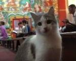 Лама Сопа Ринпоче благословил кошек в главном буддийском храме Калмыкии