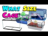 WHAT SIZE CAGE - Minimum Hamster Cage Sizes