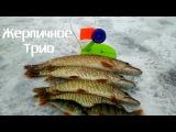 БЕШЕНЫЙ КЛЁВ ЩУКИ! Рыбалка на Жерлицы Ловля Щуки на Живца Щука Видео