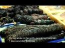 Китайская кухня трепанг морской огурец