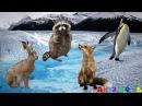 Угадай диких животных Задание для детей Дикие животные для детей Животные для детей видео