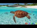 Подводный мир для детей. Учим подводный мир. Животные для детей видео. Развивающие мультики.