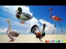 Угадай птиц Задание для детей Птицы для детей Животные для детей видео