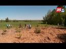 Сосны в Сосновке были высажены на месте несанкционированной свалки